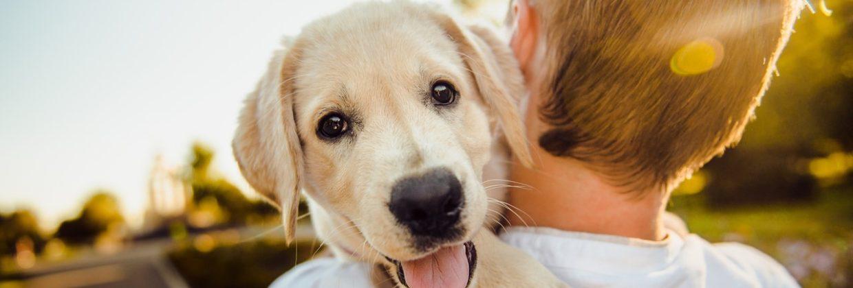 zašto je dobro imati kućnog ljubimca