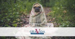 zimska odeća za pse