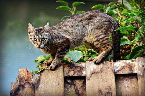 cat-3846780