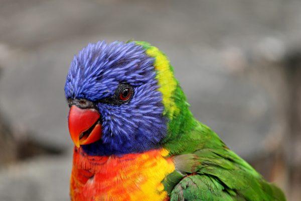 parrot-3017449
