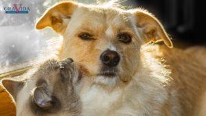 razlika između pasa i mačaka